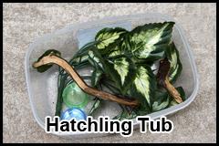 HatchlingTubThumb