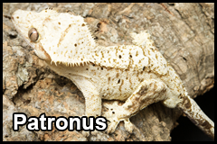 GeckoThumb__0008_Patronus