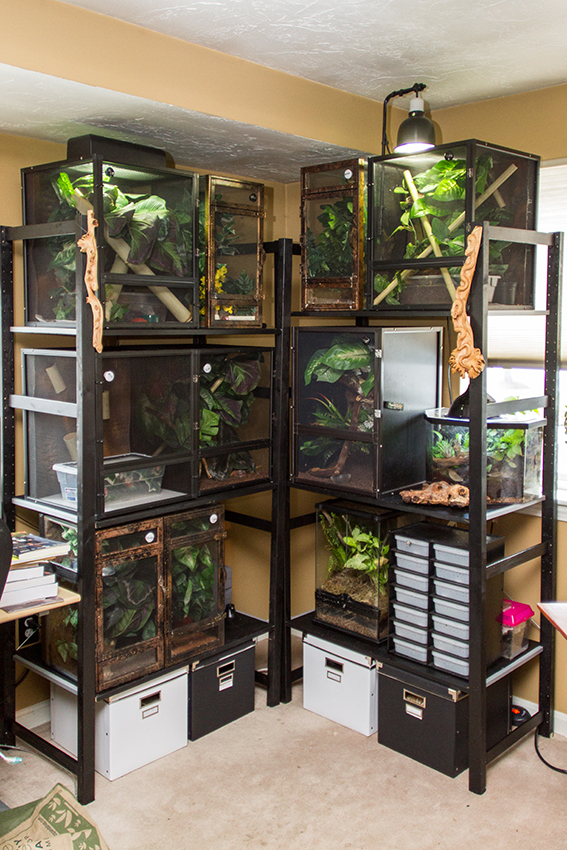 Gecko Shelves Fired Up Geckos