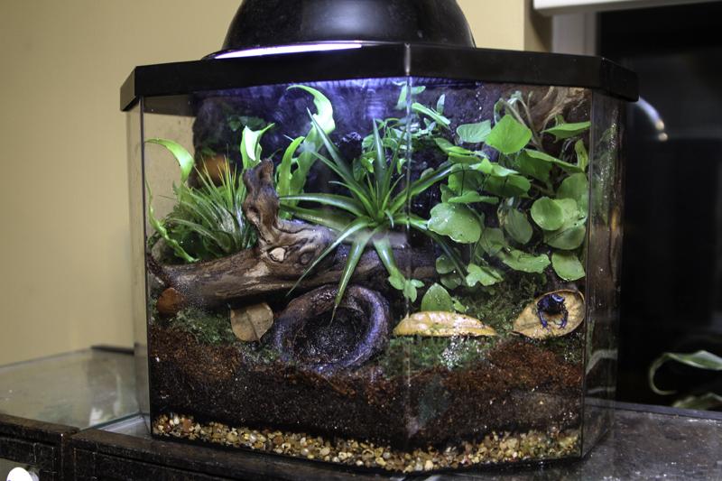 frog-tank