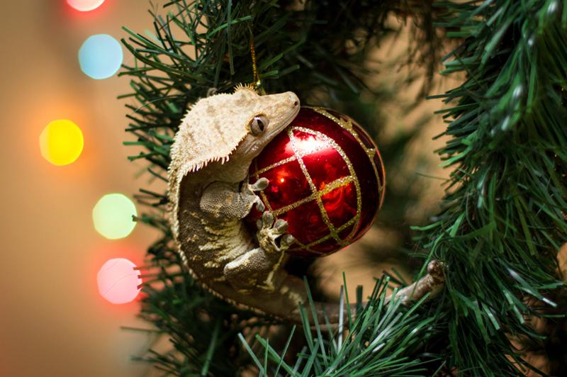 Christmas_2013_0006