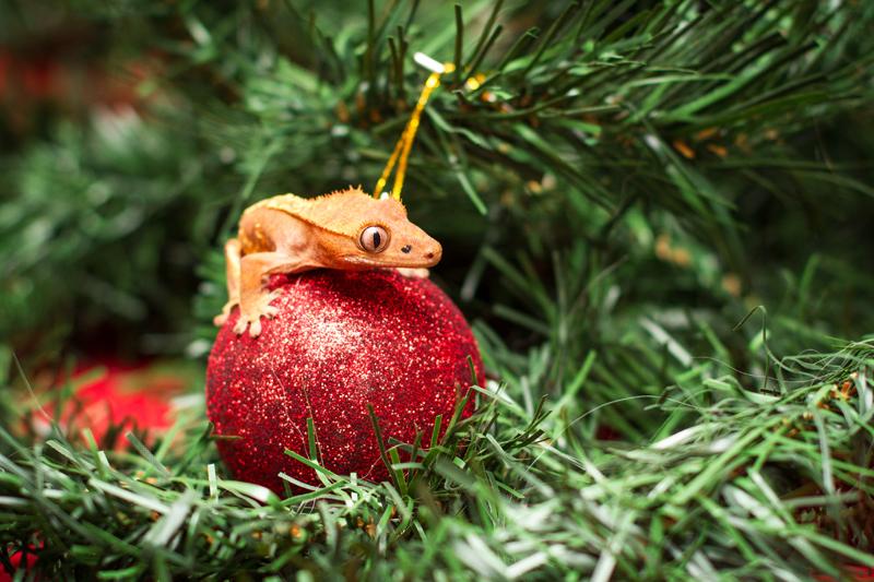 Christmas_2013_0020